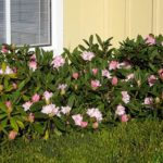 Around the Sound: The Town of Pink Flowers